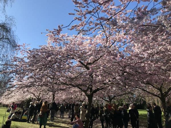 En smuk forårsdag